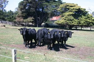 Farm land to graze and grow beef cattle was what farmers were after in South Gippsland in the 2017-2018 spring and summer property sales season.
